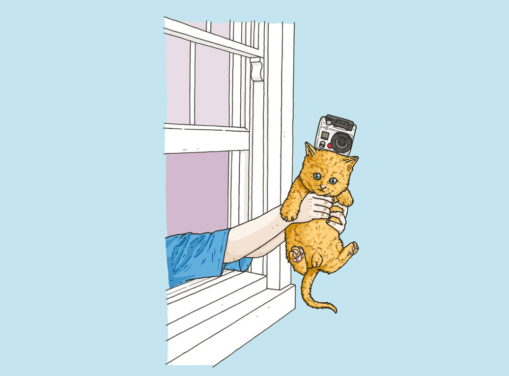 Kitten-web